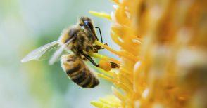 Quello che c'è da sapere sulle api (e sul perché dobbiamo difenderle)