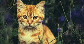 Alfie, il gatto che legge nel cuore degli umani