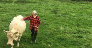 La vita segreta delle mucche, che si emozionano come noi